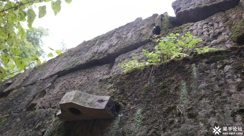 寨门寨墙 (4).JPG